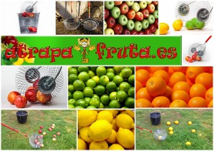 Atrapa frutos secos